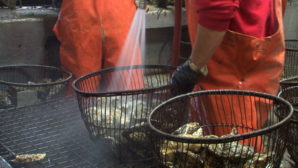Washing shell